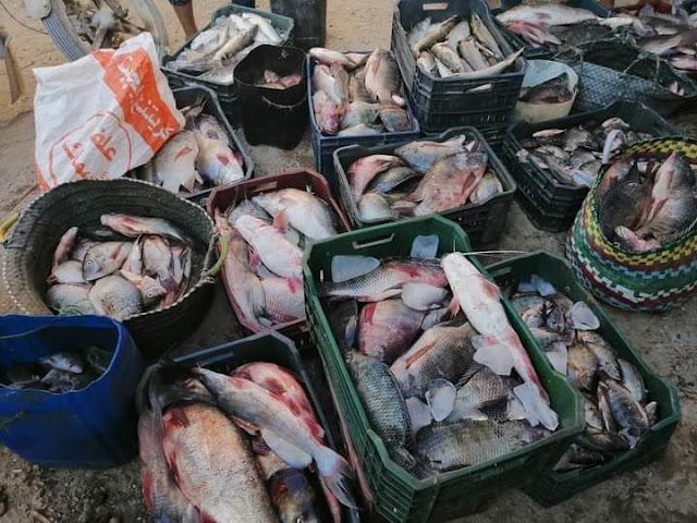 افتتاح موسم الصيد بمسطحات وادي الريان بالفيوم