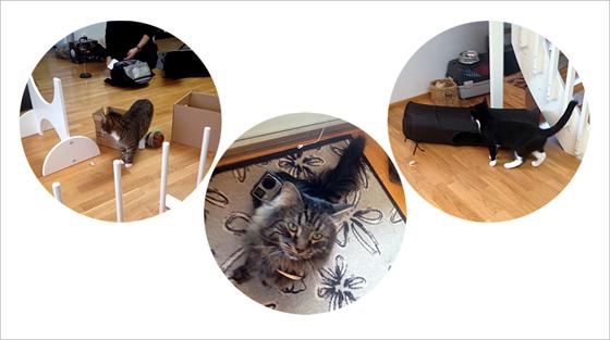 Kolme kuvaa rinnakkain, joissa kissoja kuvausten keskellä, sekä kissa go pro -kamera selässään.