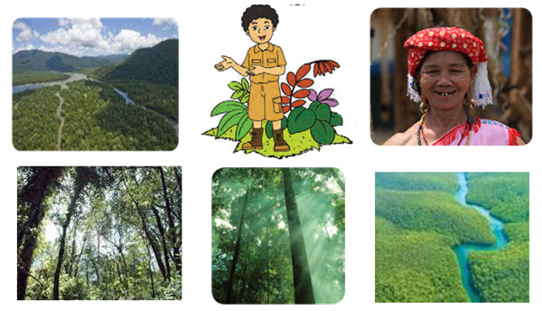Hutan Kalimantan Indonesia