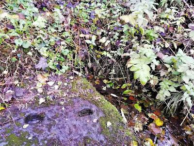 Saint Kavans Well