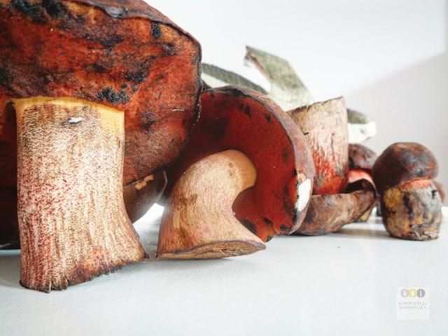 borowiki ceglastopore dania pierogi z grzybami