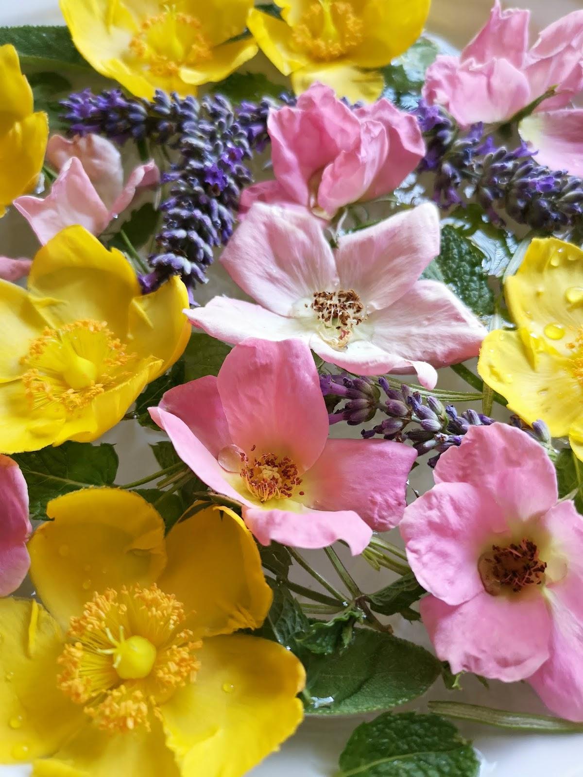 i fiori per l'acqua di san giovanni