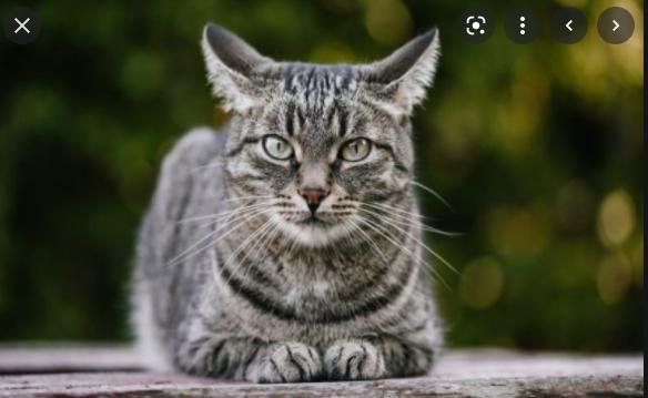 erek eek kucing