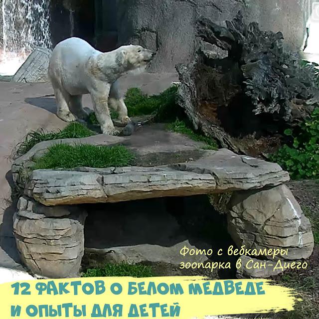 детям про белого медведя