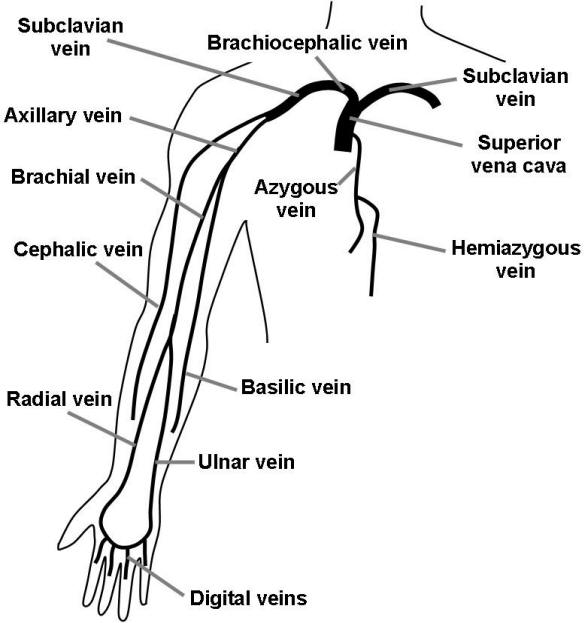 Iv Cannulation Sites as well Dont Be Vain With Your Veins additionally Ch03s15 moreover Zero Point The Story Of Mark Mccandlish And The The Fluxliner Ssp in addition Multiple Routers Access Point Setup. on access control diagram