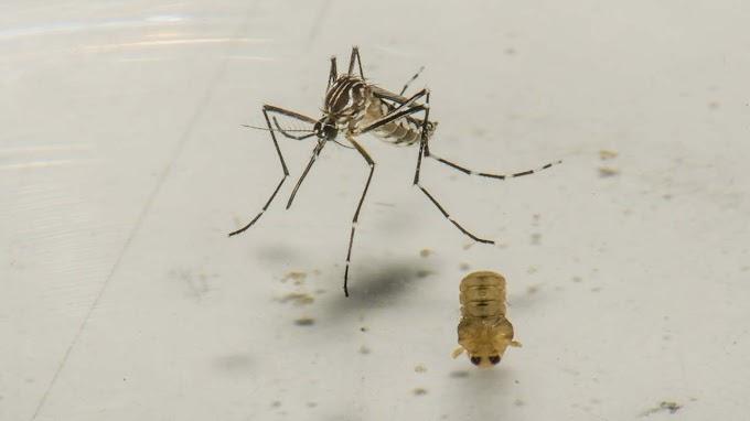 Bahia tem aumento de 25 mil casos de dengue em menos de um mês