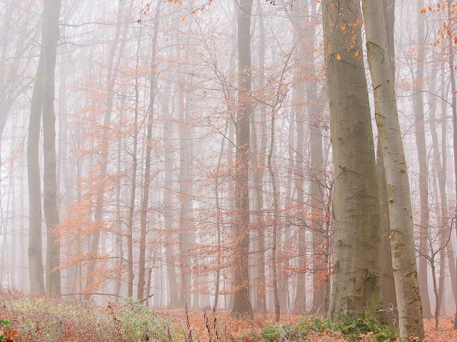 Der Nebel verringert die Kontraste. Der Wald erscheint leicht und luftig.