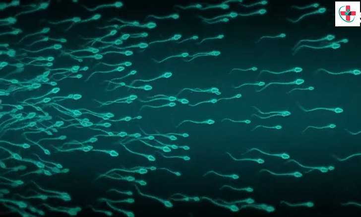 Semen-Its Importance And How To Increase Semen Volume