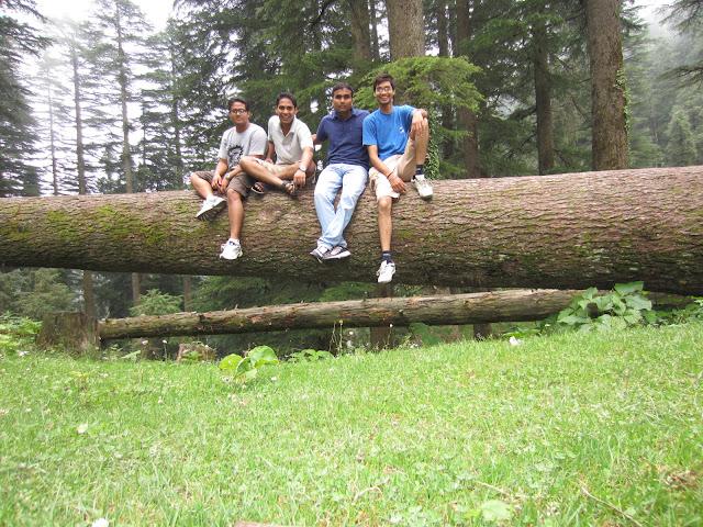 trees in kalatop