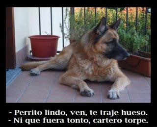 Imagenes - animales - chistosos - frasdes - risa - whatsapp