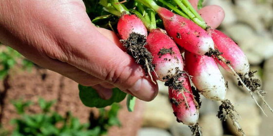 3 important tips on starting your vegetable garden during the lockdown