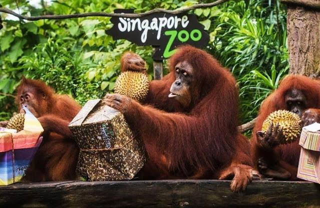 2. Singapore Zoo