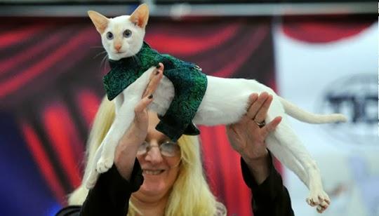 feline fashion show