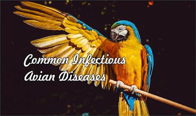 Common Infectious Avian Diseases