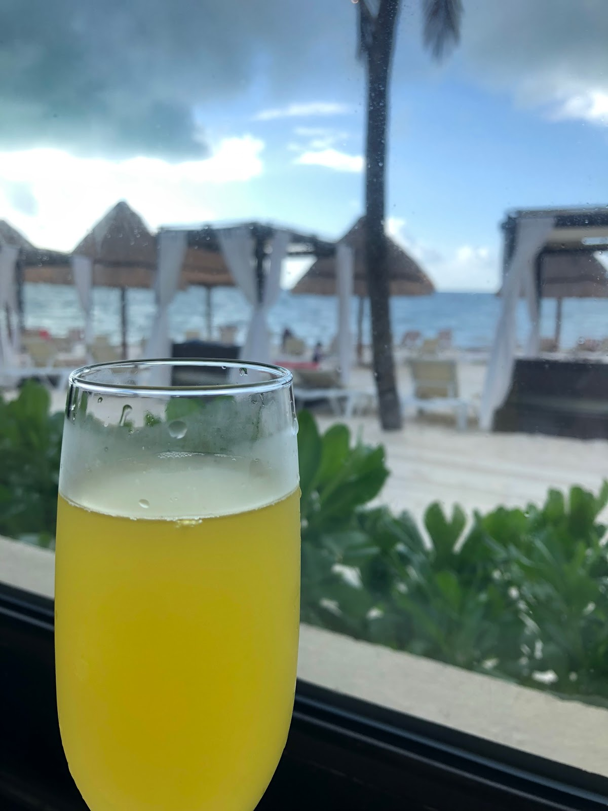 a mimosa is featured with the ocean shortly behind it, to show the view from breakfast