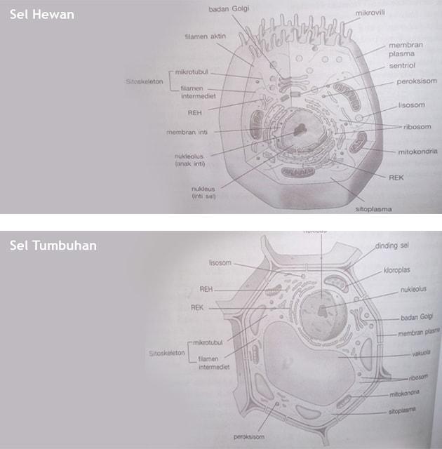 sel hewan, sel tumbuhan