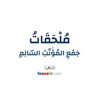 خلفية بيضاء تحوي الجملة الآتية: المُلْحَقَاتُ بِجَمْعِ المُؤَنَّثِ السَّالِمِ، موقع فوائد faouaid.com