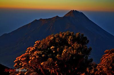 Sabana 1 - View Edelways dan Gunung Merapi dai Jalur Pendakian Via Selo