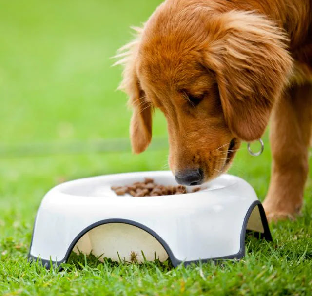 mon-chien-ne-mange-plus