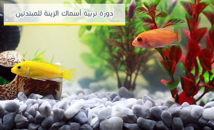 دورة تربية أسماك الزينة للمبتدئين