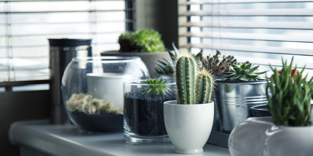 ¿Te gusta lo elegante? Prueba con un cactus.