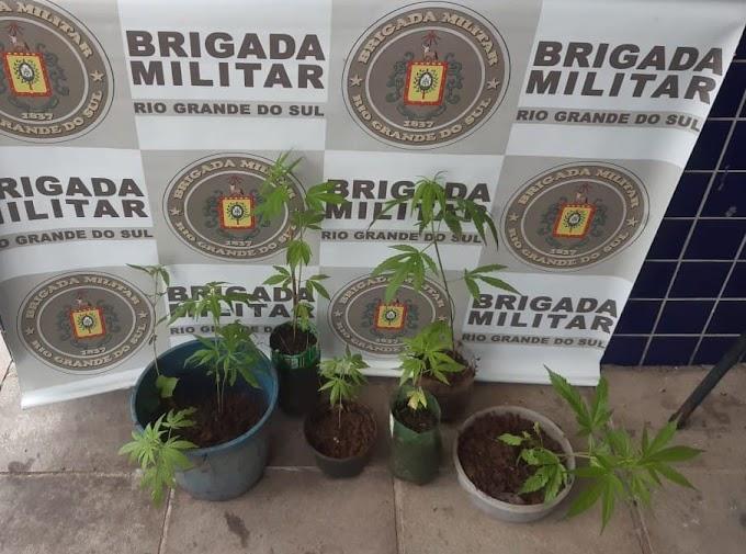 GRAVATAÍ | Homem é preso por cultivar maconha em casa