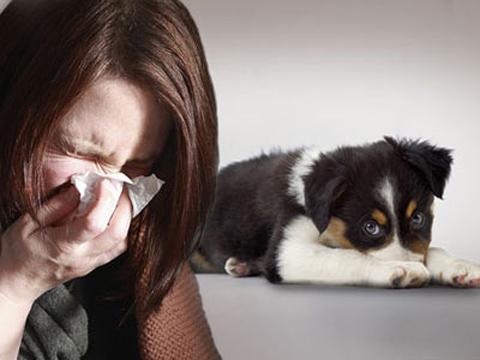 Dấu hiệu nhận biết dị ứng với chó