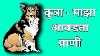 This image shows the german shepard dog and is been used for Marathi essay on dog