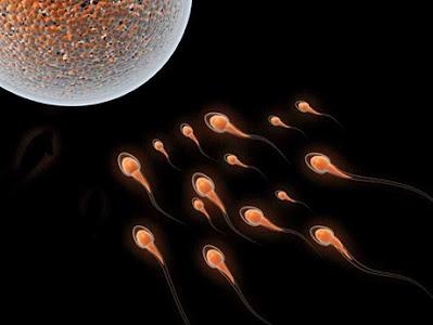 精蟲活動力差可以補充q10