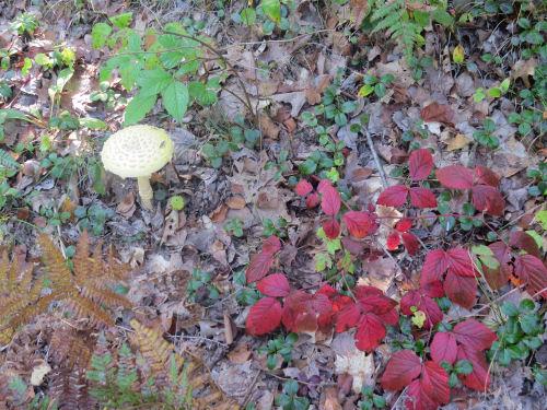 red leaves and mushroom