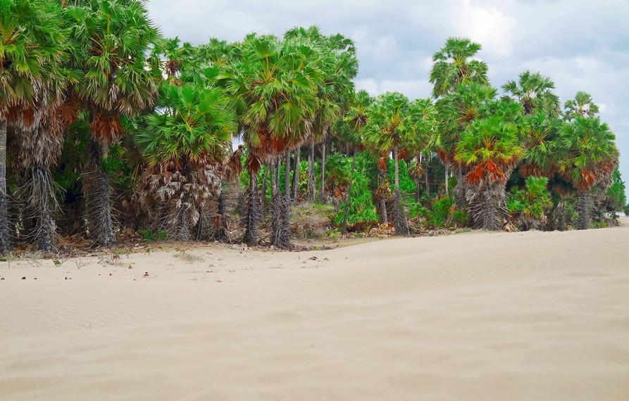 Keindahan Gurun Pasir Timor Tengah Selatan di Pantai