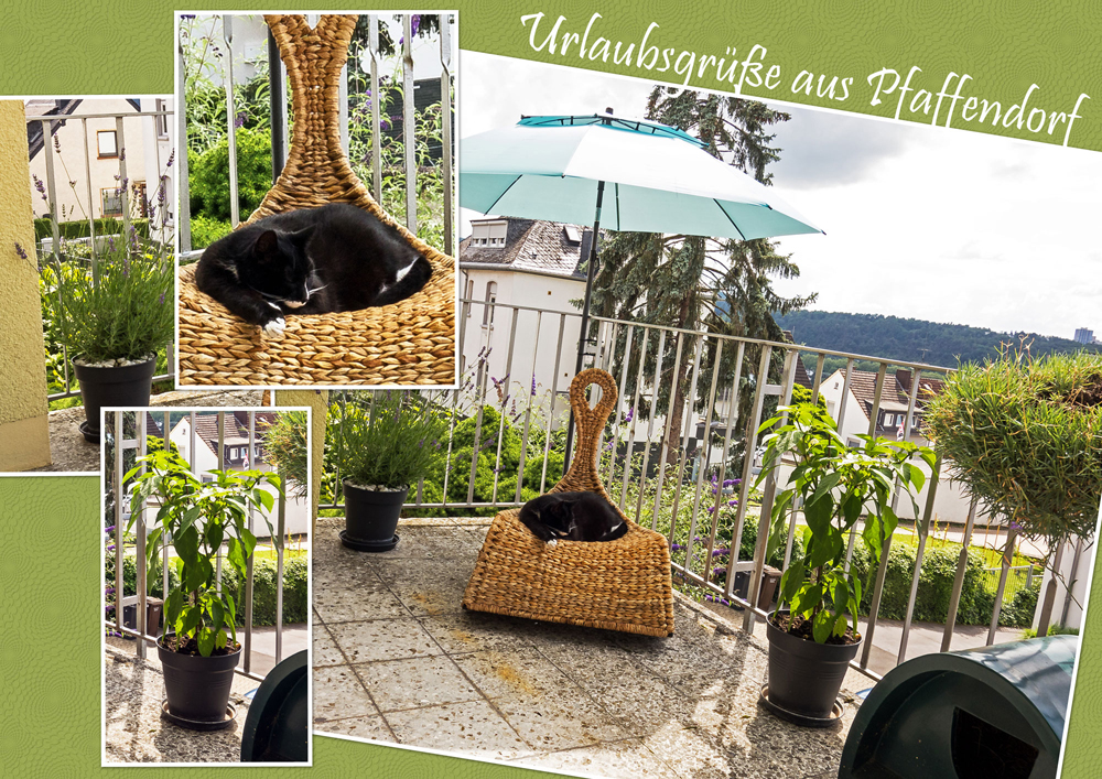Collage von verschiedenen Bildern, die einen Balkon mit Topfpflanzen und Sonnenschirm und eine schwarz-weiße Katze im Korbstuhl zeigen, zusammengestellt im Stil einer Ansichtskarte