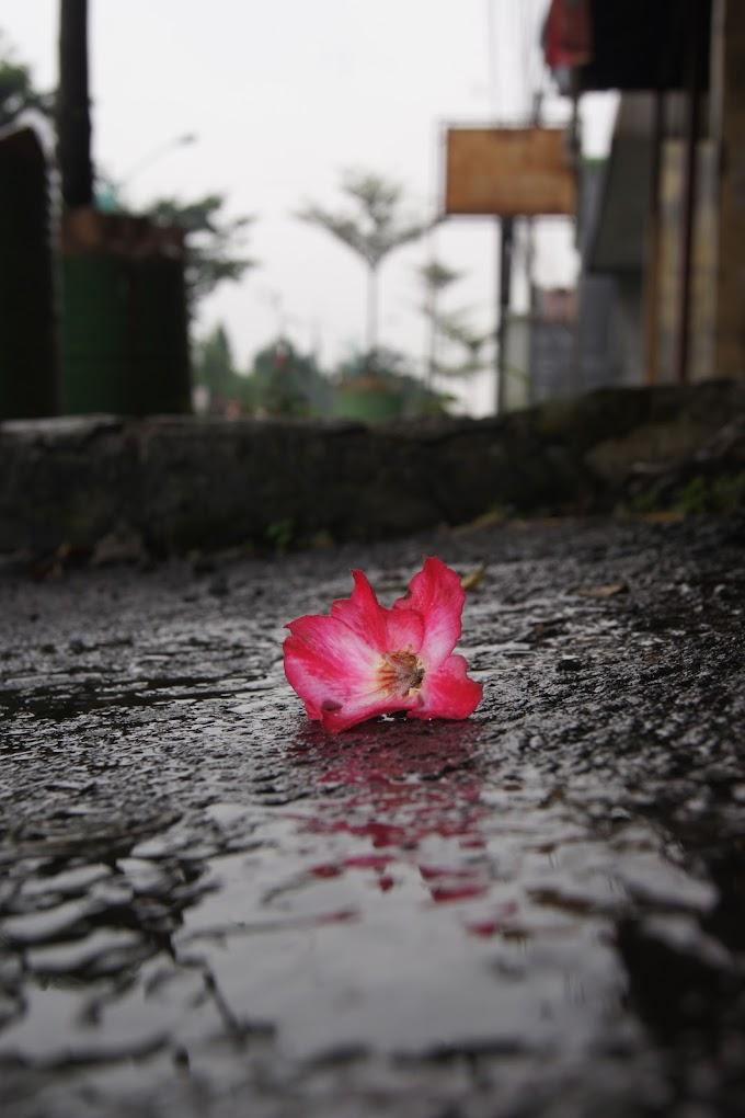 Bunga Pink yang jatuh di tepi jalan