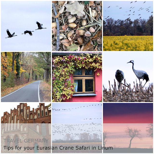 The Touristin Germany Brandenburg Linum. Kraniche Felder. Cranes West Europe Route