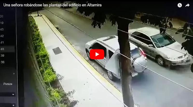 Una señora de clase alta robándose las plantas del edificio en Altamira