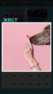 показан жест пальцем около носа собаки 667 слов 3 уровень