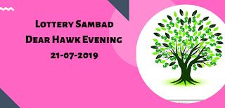 Dear Hawk Evening
