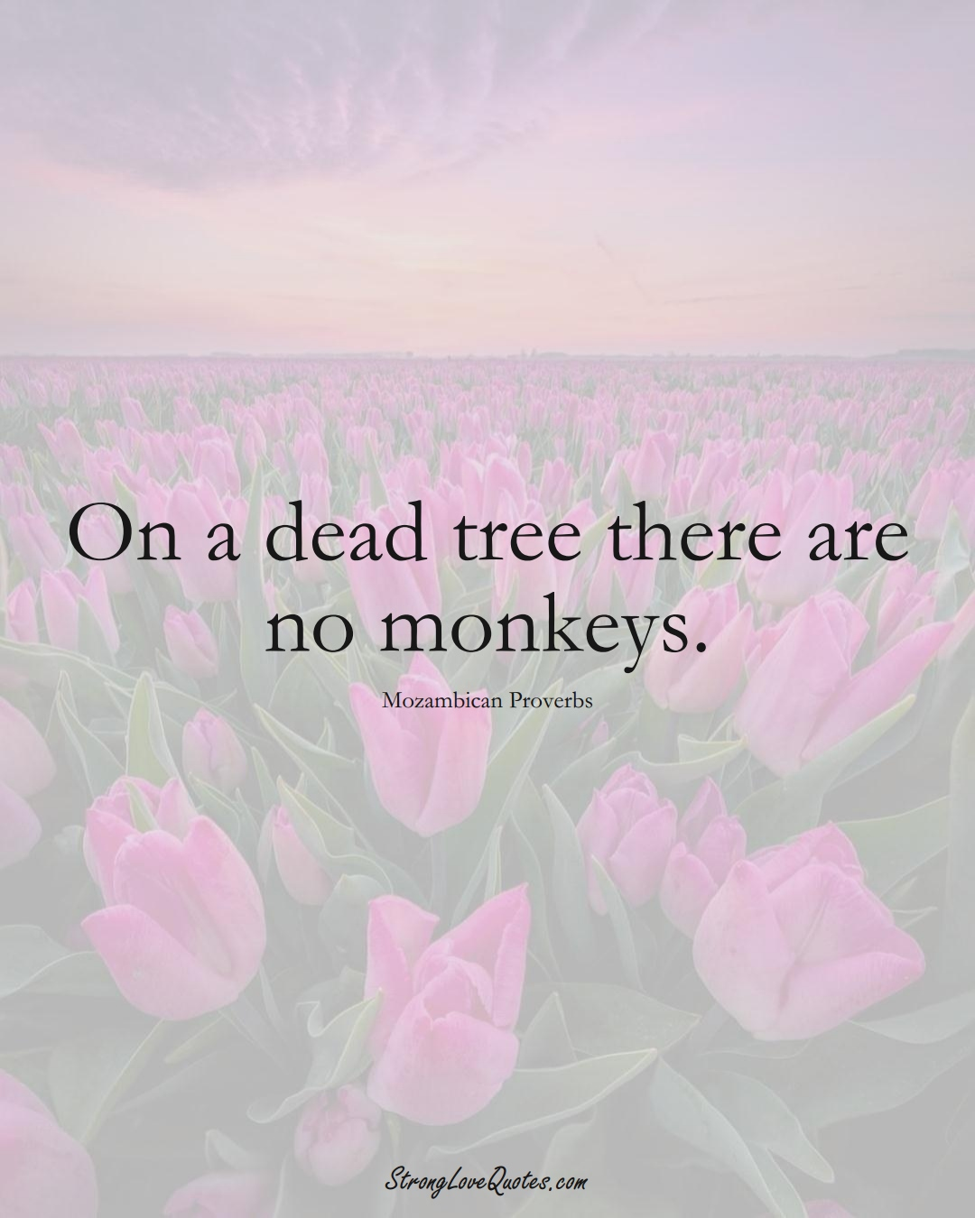 On a dead tree there are no monkeys. (Mozambican Sayings);  #AfricanSayings
