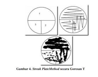 streak plate methode teknik sebar secara goresan T