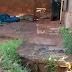 Após forte chuva, jacaré aparece em rua