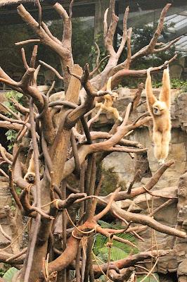 Monkeys at the Lied Jungle at Omaha's Henry Doorly Zoo