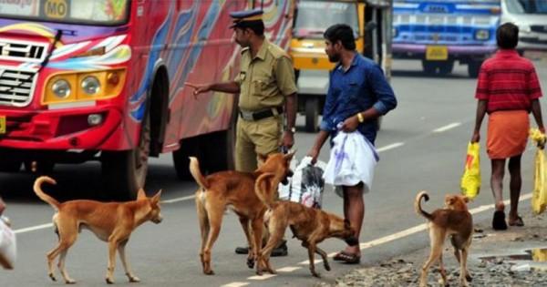 Anjing Liar Di India