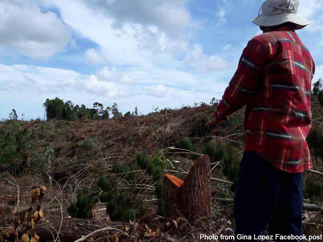 Gina Lopez reveals mining corp cut down century old trees 2 days after her rejection