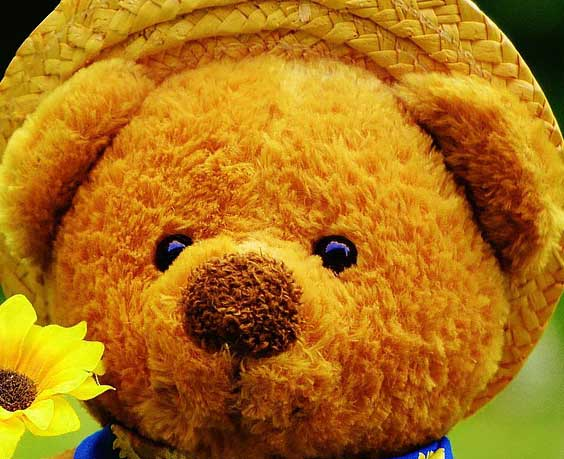 Teddy%2BBear%2BImages%2BPics%2BHD29