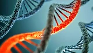 rekayasa genetika akan berkembang pesat pada dekade ini