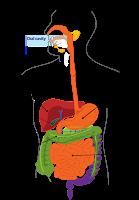 किड़नी रोगमुक्त और स्वस्थ कैसे रखें Diet Tips and Precaution for Healthy Kidney in hindi