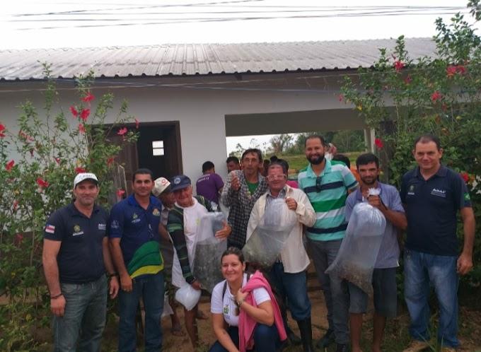 Prefeitura de Envira  entrega 80 mil alevinos de tambaqui a produtores do município