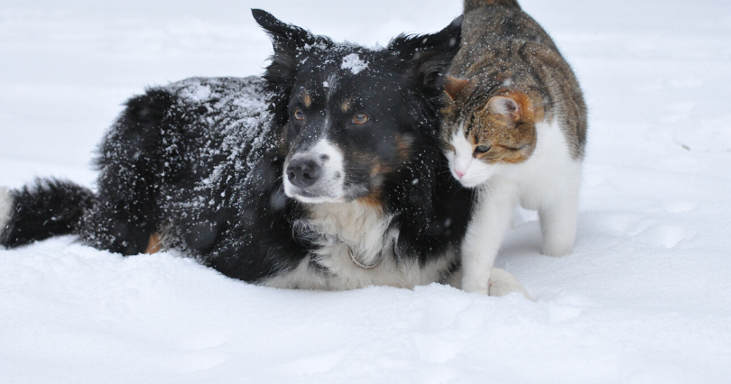 10 winter dangers every pet owner should know