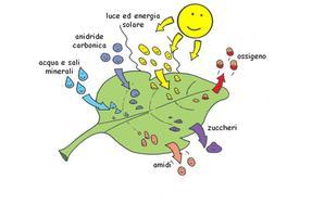 primo ciclo steroidi massa