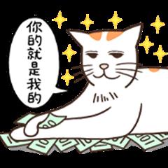 Orange white cat FARDI 3